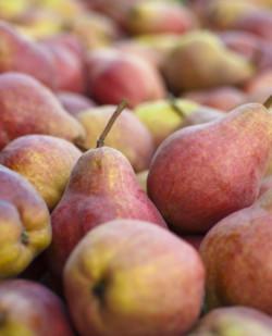Foto Fruchtbrennerei Tinnauer